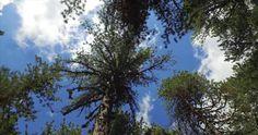 Cyprus Troodos Mountains Atalanti Nature Trail Part A - YouTube