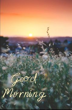 Good Morning Picture, Morning Pictures, Morning Wish, Quotes, Movie Posters, Good Morning Wishes, Good Morning, Quotations, Film Poster