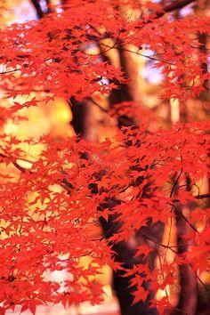 紅葉  -red-