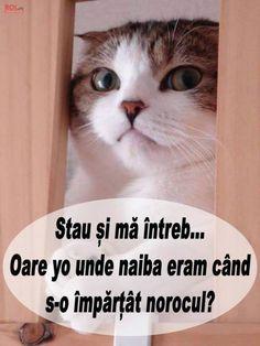 Cat Face, Lol, Funny, Ha Ha, Hilarious, Entertaining, Fun, Humor