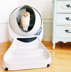 The Litter-Robot III Open Air automatic self-cleaning litter box for cats separates waste from clean litter after each use so you never have to scoop again. Cat Liter, Benny And Joon, Litter Robot, Self Cleaning Litter Box, Cat Toilet Training, Cat Perch, Cat Care Tips, Dog Care, Cat Carrier