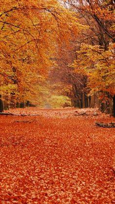Orange Overload, Fall in Hoenderloo - Dutch village, Gelderland, Netherlands My home country, so beautiful! Autumn Scenes, Best Seasons, Fall Pictures, Belle Photo, Autumn Leaves, Fallen Leaves, Beautiful Places, Beautiful Wife, Beautiful Scenery