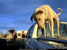 Desktop papeis de parede - Humana e animal: http://wallpapic-br.com/national-geographic-fotos/humana-e-animal/wallpaper-38017