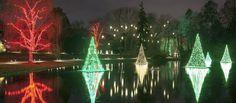 Un árbol con suculentas, luces y Navidad en Longwood Gardens | El Blog de La Tabla