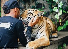 Courting controversy: Visiting the Black Jaguar-White Tiger Foundation in Mexico on Monday, the 31-year-old found himself under fire from animal right organisation, PETA