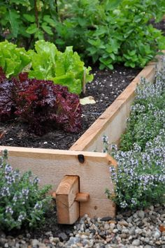 Raised bed with lemon thyme border! ♥ I like the structure of this bed.  No chance of it coming apart as it would with nails.