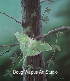 Luna Moth Print, Acrylic, Insects, Wildlife Art, Nature, Home Decor