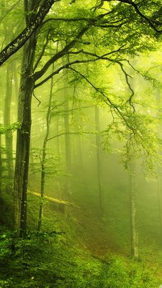 Photo of Green Forest for fans of Nature 36241523 All Nature, Amazing Nature, Flowers Nature, Walk In The Woods, Landscape Pictures, Landscape Art, Asian Landscape, Forest Landscape, Landscape Wallpaper