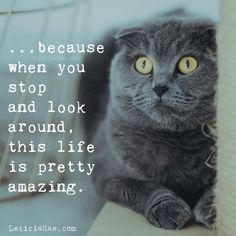 ...because when you stop and look around, this life is pretty amazing. 💛 #LeticiaRae #funny #silly #positivevibesmatter #fun #positivevibes #findingthesilverlining #positiveside #fallbrook #cat #greycat #lifeisamazing #lifeisbeautiful #gratitude #appreciation Gratitude Changes Everything, Gratitude Quotes, Silver Lining, Blog Entry, Life Is Beautiful, Positive Vibes, Personal Development, Appreciation, Motivational Quotes