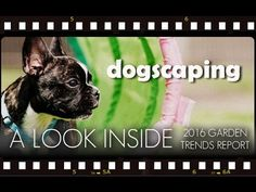Trending Thursday: Dogscaping is creating a safe place for pets to roll, run and roam outside.  Learn more about Dogscaping from our latest YouTube video.