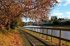 Postcard of autumn in Melbourne