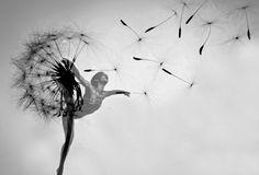 dancing dandelion (Photoshop May, 2013)