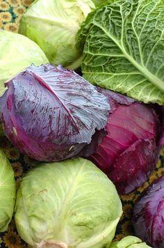 Col blanca, verde, roja. Cabbage