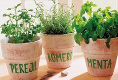 Lo que debes saber sobre las Hierbas Aromáticas - Vida Lúcida