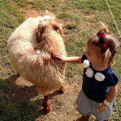 A little sheep escaped from his area we made fast friends at @cherrycrestadventurefarm #VisitLancaster #JerseyFamilyFun