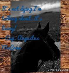 Western Horse Quotes, Lonesome Dove Quotes, Westerns, Horses, Movie Posters, Animals, Art, Animales, Art Background
