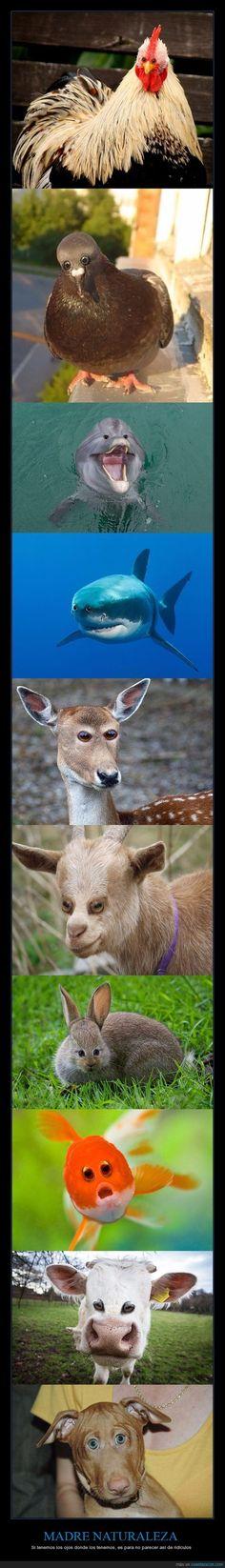 Cómo serían estos 10 animales si tuvieran los dos ojos juntos delante - Si tenemos los ojos donde los tenemos, es para no parecer así de ridículos   Gracias a http://www.cuantarazon.com/   Si quieres leer la noticia completa visita: http://www.estoy-aburrido.com/como-serian-estos-10-animales-si-tuvieran-los-dos-ojos-juntos-delante-si-tenemos-los-ojos-donde-los-tenemos-es-para-no-parecer-asi-de-ridiculos/