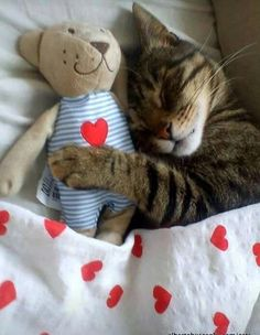 KING COLLIN'S CAT PALACE: has members. This group is for anything about cats. All cat lovers are welcome. Super Cute Animals, Cute Baby Animals, Animals And Pets, Cute Cats And Kittens, I Love Cats, Kittens Cutest, Bb Chat, Image Chat, Sleepy Cat