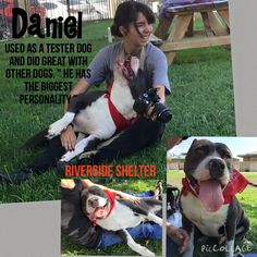 10/01/15 Re-Dumped & EUTH LISTED **RIVERSIDE, CALIFORNIA** URGENT 911 DANIEL - ID #A1225417 (Available NOW) ~Used as a tester dog and did great with other dogs. He has the biggest personality~male, black & white Pit Bull Terrier about 4 years old. I have been at the shelter since Aug 29, 2015. https://www.facebook.com/649241055113967/photos/a.954461177925285.1073741843.649241055113967/977162948988441/?type=3&theater