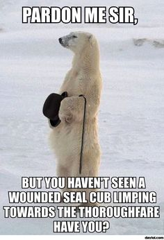 I'm Sorry, Good Sir, But I Have Seen No Such Seal. Cheerio and Henceforth or Whatever! - World's largest collection of cat memes and other animals Animals And Pets, Baby Animals, Funny Animals, Cute Animals, Exotic Animals, Polar Bears Live, Penguins And Polar Bears, Stupid Funny Memes, Hilarious