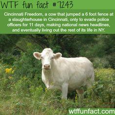 Cincinnati Freedom - WTF Fun Fact