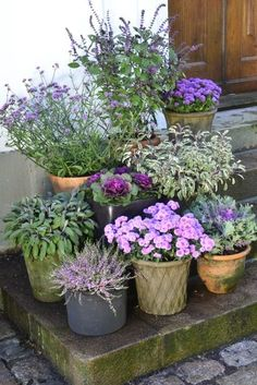Container gardening is a fun way to add to the visual attraction of your home. You can use the terrific suggestions given here to start improving your garden or begin a new one today. Your garden is certain to bring you great satisfac Container Flowers, Container Plants, Container Gardening, Back Gardens, Outdoor Gardens, Garden Cottage, Plantation, Garden Planters, Dream Garden