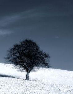 prints on metal Black & White landscape black and white nature tree season seasonal snow hill slope sky dark cold frost