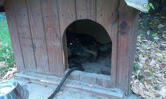 pies porzucony na stacji Shell okolice Wyszkowa!!! POMOC potrzebna dla psa!!