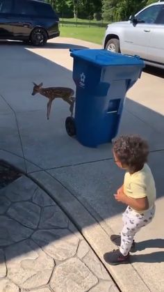 Entertainment Discover animals pets The boy and funny Bambi a like this little cute animals Cute Funny Animals Cute Baby Animals Animals And Pets Cute Animal Humor Wild Animals Cute Animal Videos Funny Animal Pictures Animal Pics Baby Deer Cute Funny Animals, Cute Baby Animals, Animals And Pets, Wild Animals, Cute Animal Humor, Cute Puppies, Cute Dogs, Cute Babies, Cute Animal Videos