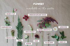 Seasonal Flower Guide: Winter