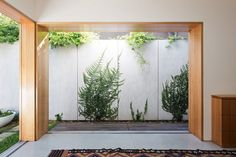 Love a new Ficus on a white wall  bh_030214_03 » CONTEMPORIST