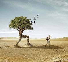 This image is so funny and amazingly put together. I love how the tree is actually walking behind the man and the few birds flying above the tree completes the image perfectly. I would love to learn how to edit pictures to make a humorous photo. Facebook Timeline Covers, Tree Wallpaper, We Are The World, Creative Words, Creative Writing, Creative Thinking, Ad Design, Photo Manipulation, Manipulation Photography
