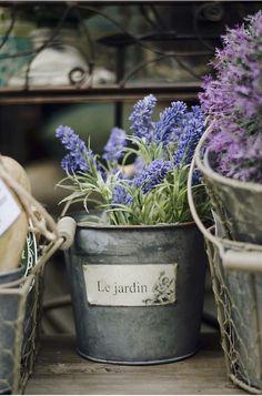 ♡lavanda - Lavender by Rew Elliott Lavender Cottage, Lavender Blue, Lavender Fields, Lavander, French Lavender, Provence Lavender, Pot Jardin, Container Gardening, Outdoor Gardens