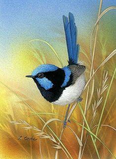 """And a blue wren in a gum tree"" Pretty Birds, Beautiful Birds, Watercolor Bird, Watercolor Paintings, Australian Birds, Guache, Bird Pictures, Bird Prints, Bird Art"