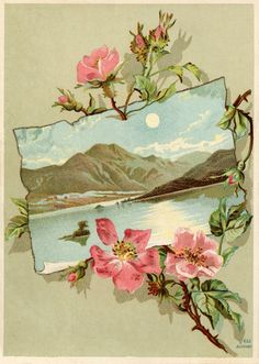 The Graphics Fairy: Vintage Rose Frame Images