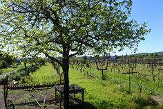FAB #Napa #winery to