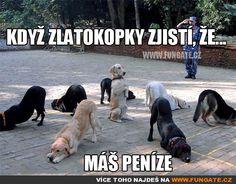 FunGate.cz Funny Dog Memes, Funny Animal Memes, Cute Funny Animals, Funny Cute, Funny Dogs, Cat And Dog Memes, Hilarious Sayings, Funniest Animals, Pet Memes