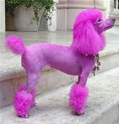 pink dog - Yahoo Image Search Results