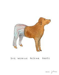 cão de pijama