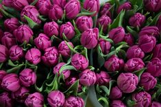 A florist's guide to tulips   New Covent Garden Market