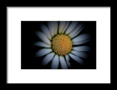 Daisy Framed Print by Roberto Pagani. All framed prints are professionally printed, framed, assembled, and shipped within 3 - 4 business days and delivered ready-to-hang on your wall. Choose from multiple print sizes and hundreds of frame and mat options. Framed Prints, Canvas Prints, Wall Art For Sale, Hanging Wire, Clear Acrylic, Fine Art America, Daisy, Travel Photography, Landscape