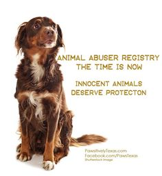 Animal Abuser Registry Legislation, Now is the time-aggrivate, pester, make yourself a nuisance-whatever it takes to get your senators, legislators, congressmen, to pass the laws we need to make known these animal abusers,whoever they might be policemen, doctors, lawyers, teachers, preachers, or the next door neighbor not just in one state but a national registry. Start now the animals need a good Christmas present.