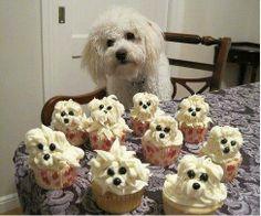 Un postre canino. #cupcake #perros