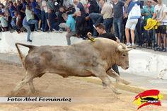 torodigital: Empiezan las fiestas en la Colonia Segarra de La ...