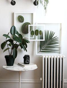 DIY: Pressed Plant Frame