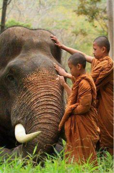 Ciò che conta non è fare molto, ma mettere molto amore in ciò che si fa. (MadreTeresa di Calcutta)
