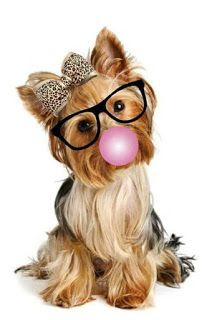 More About The Feisty Yorkshire Terrier Puppies Health Yorkie Terrier, Yorkie Puppy, Yorkshire Terriers, Cute Puppies, Cute Dogs, Dogs And Puppies, Animals And Pets, Cute Animals, Chanel Art