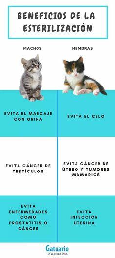 tipos de gatitos de prostatitis