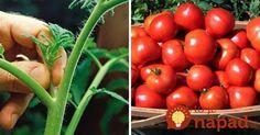 Toto by mal vedieť každý, kto pestuje paradajky: 11 tajomstiev, ako dopestovať bohatú úrodu šťavnatých a chutných plodov! Gardening Tips, Health Fitness, Pergola, Vegetables, Drink, Food, Gardens, Garten, Soda