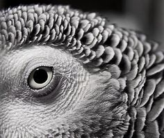 African grey parrot...such an amazing bird....intelligent, and sensitive.  Once you 'friend' this creature, you have a companion for life.  Don't take one in unless you really understand what they need.....for their sake......